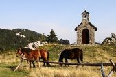 Horses grazing on pasture in front of chapel — Stock Photo