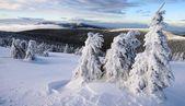 View from jesenik to kralicky sneznik moravia - czech republic — Stock Photo