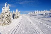 Ski trail on jesenik mountain czech republic — Foto Stock