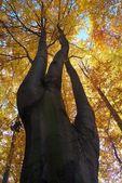 View of tree-top of broadleaved tree — Stock Photo