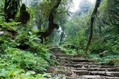 Nepalian rainforest with pathway — Stock Photo
