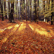 View from autumnal hardwood forest — Stock Photo
