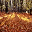 Stock Photo: View from autumnal hardwood forest