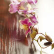 Stock Photo: Orchid