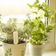 Rosemary and lemon balm on windowsill — Stock Photo