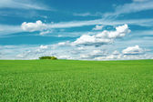 Beautiful summer rural landscape — Stock Photo