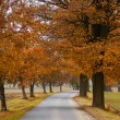 Stock Photo: Road in autumn with orabge colored trees