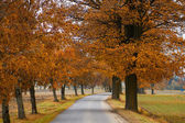 Road in the autumn with orabge colored trees — Stock Photo
