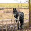 Skinny Horse outside in fenced yard area — Stock Photo