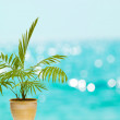 Tropical palm in pot - Stock Photo