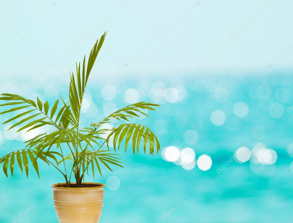 Tropical palm in pot against blue bokeh background — Stock Photo #9347396
