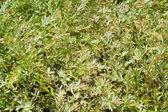Tekstura zielonych liści — Zdjęcie stockowe