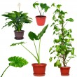 Collection of different house plants — Stock Photo