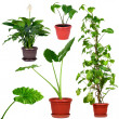 Stock Photo: Collection of different house plants