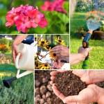 Gardening — Stock Photo #8603026