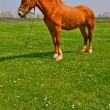 Horse on a summer pasture - Stockfoto