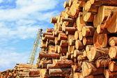 Preparación de madera — Foto de Stock