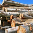 Wood preparation — Stock Photo #10624901