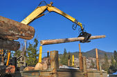 Loading of logs on transport — Stock Photo