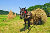 Hay preparation. — Foto Stock