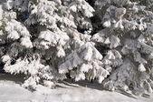 冬季木材的片段 — 图库照片