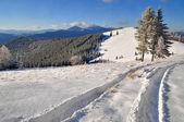 Estrada de inverno madeira — Foto Stock