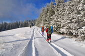 Tourists on wood winter road — Stock Photo