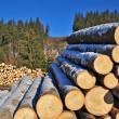 Wood preparation — Stock Photo #8489056