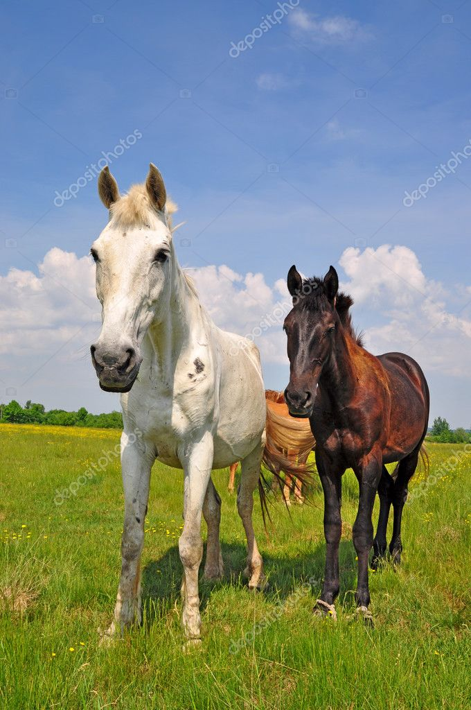 A horses on a summer pasture in a rural landscape  Stock Photo #8545121