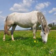 Horse on a summer pasture. - Foto Stock
