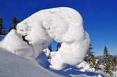 Sapins sous la neige à flanc de colline — Photo