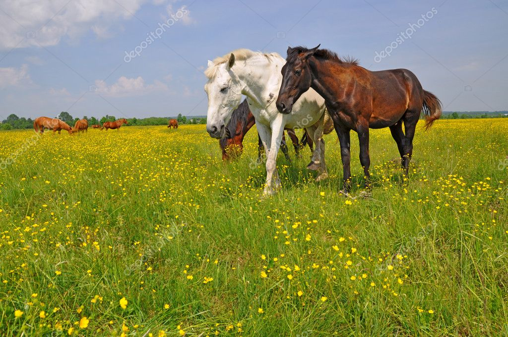 Horses on a summer pasture in a rural landscape. — Stock Photo #8794245