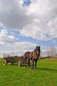 Horse with a cart. — Stockfoto