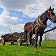 Foto Stock: Horse with cart.