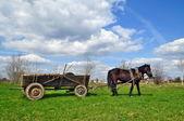 购物车的马 — 图库照片