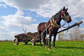 Cavalo com um carrinho — Foto Stock