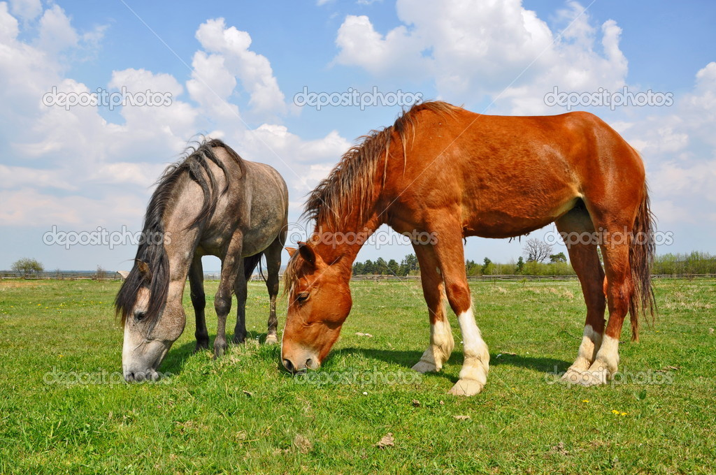 A horses on a summer pasture in a rural landscape  Stock Photo #8921756