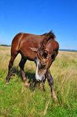 лошадь на летних pasturef — Стоковое фото