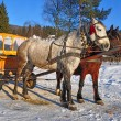 Horses with the wooden carriage - Stok fotoğraf