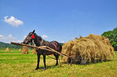 Hay preparation — Foto Stock