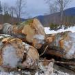 Wood preparation — Stock Photo