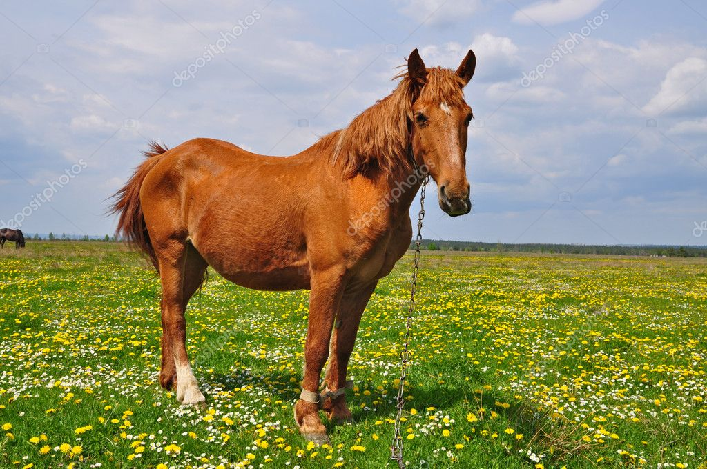 A horse on a summer pasture in a rural landscape. — Stock Photo #9420125