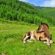 Stock Photo: Foal on a summer pasture.