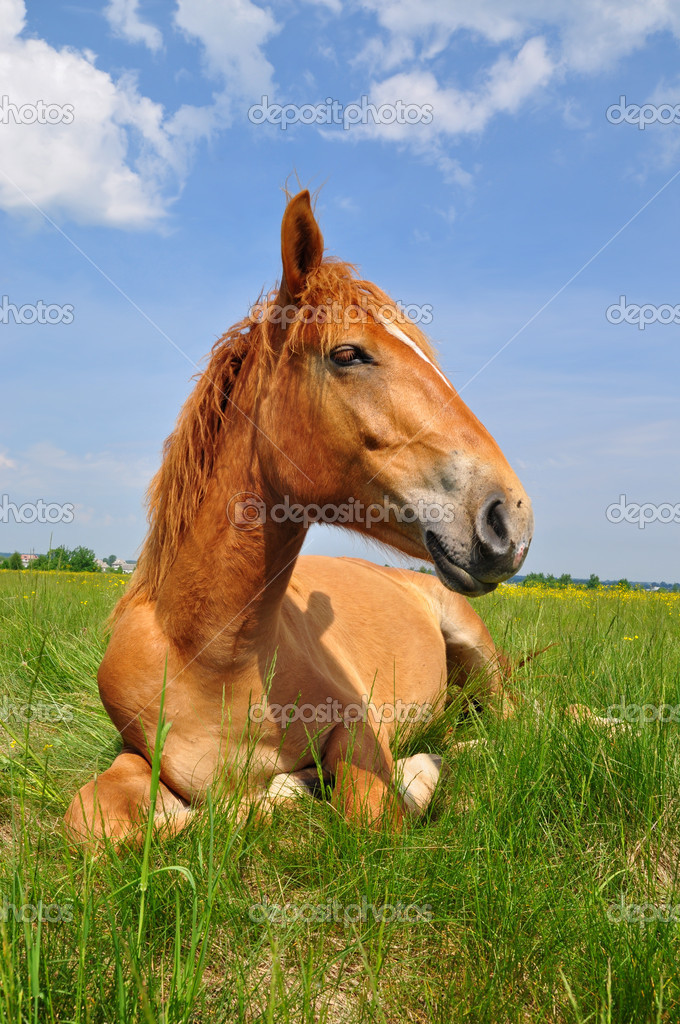 A horse on a summer pasture in a rural landscape  — Stock Photo #9590180