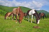 Horses on a summer mountain pasture — Fotografia Stock