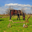 Foto Stock: Horse with cart