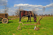 Horse with a cart — Foto Stock