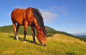 夏季高山牧场上的马 — 图库照片