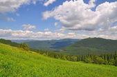夏天在山 — 图库照片