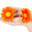 Beauty hands and flower — Stock Photo